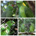 Parrots Los Pumas Rescue Centre