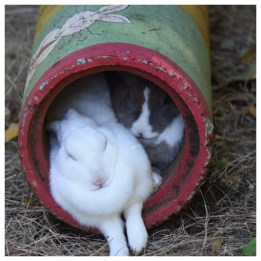 Rabbits Los Pumas Rescue Centre