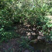 Finca streams
