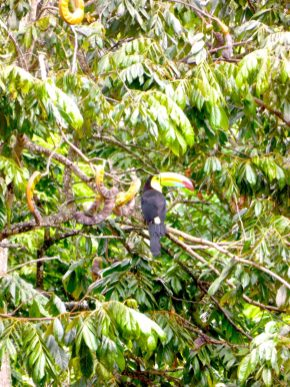 Toucans, Monkeys, and more