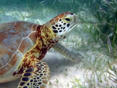 Green Alliance Partner Update: Save the Turtles (Costa Rica)