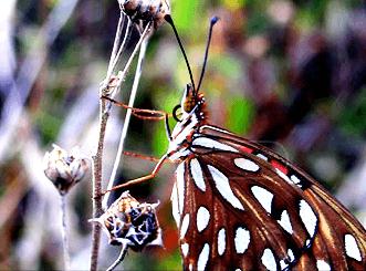 Fincas Naturales' Butterfly Botanical Garden