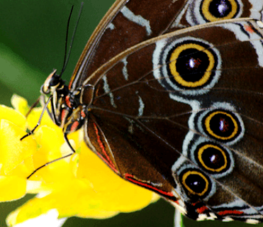 Costa Rica Creatures Series: BUTTERFLIES