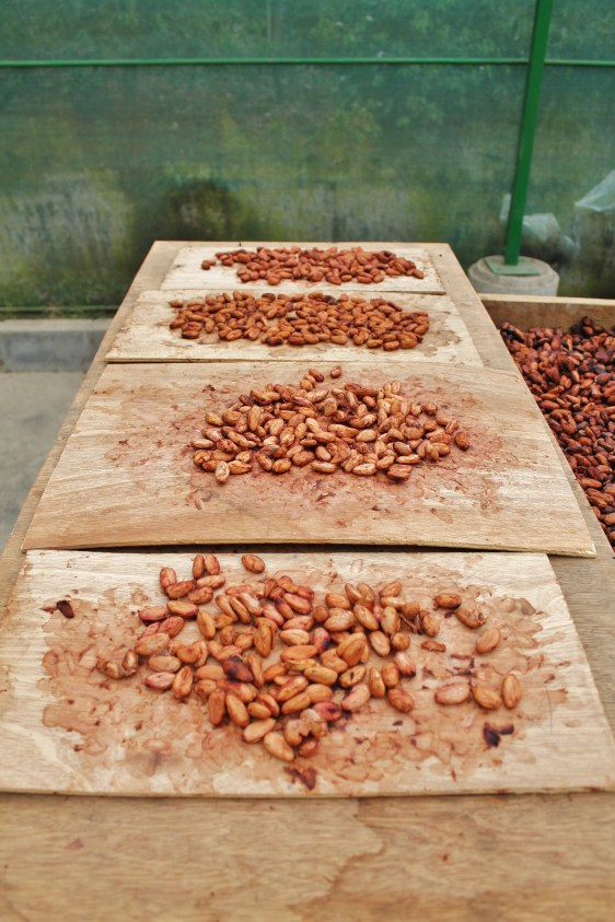 "Chocolate ""seed roasting"""