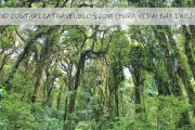 Must-Know Info About Monteverde Costa Rica From Seasoned Visitors