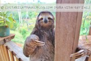 How, When, And Where To See Sloths In Costa Rica (15+ Spots)