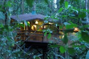 TreeHouse (20)