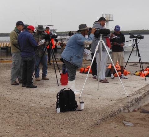 Participantes identificando aves en el muelle de Puerto Adolfo López Mateos, Bahía Magdalena.