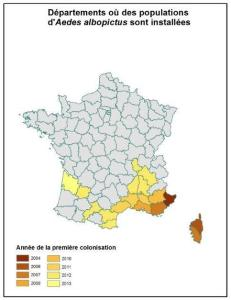 Expansion mosquito tigre Francia