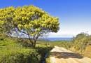 La Ruta de la Mimosa en la Costa Azul