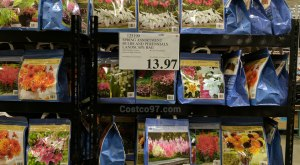 Spring Assortment Bulbs and Perennials - 125199