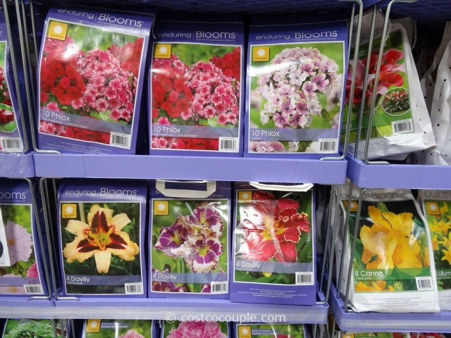 Enduring Blooms Spring Perennial Assortment Bulbs
