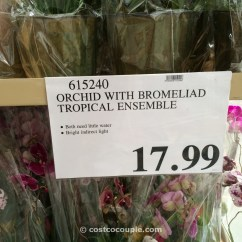 What Is A Zero Gravity Chair Clear Folding Chairs Orchid With Bromeliad