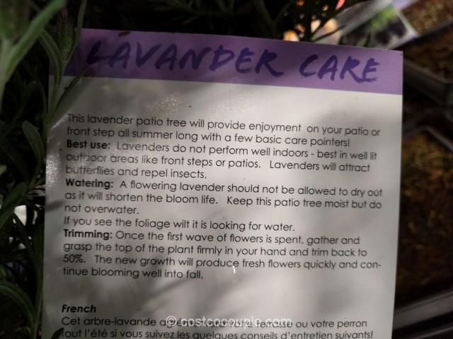 Lavender Patio Tree