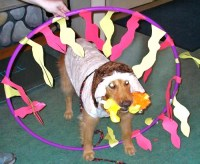 Circus Lion Dog Costume | Costume Pop