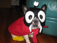Nibbler Futurama Dog Costume | Costume Pop
