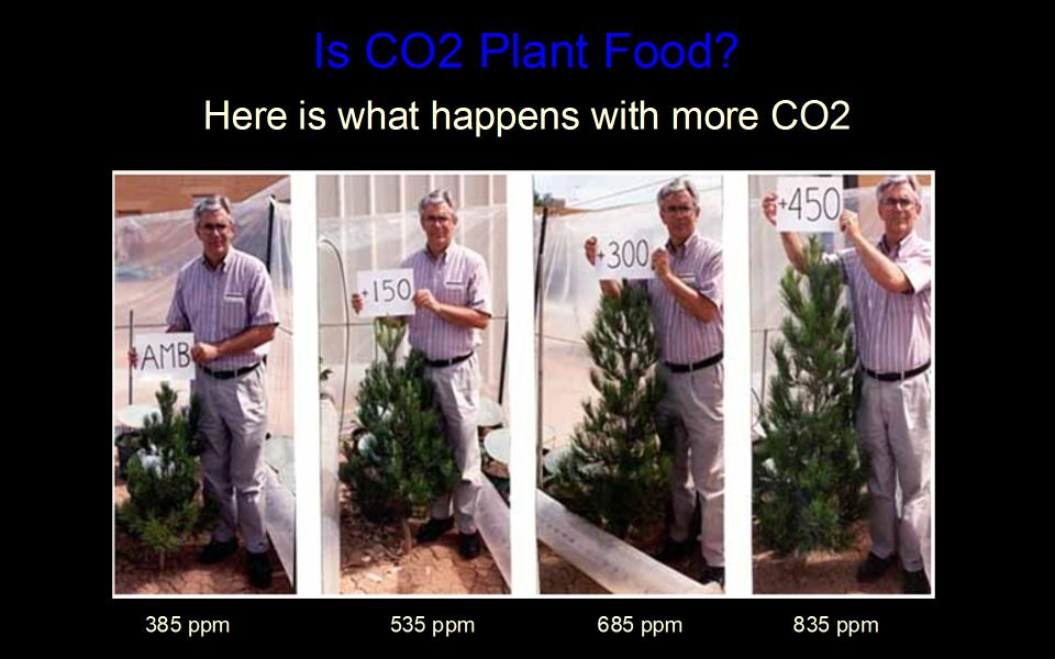 [Image: CO2-pineGrowth100120half.jpg]
