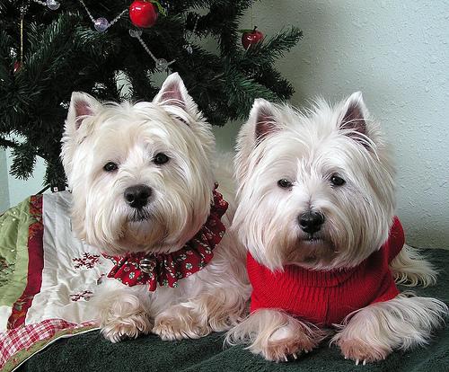 Christmas Doggies Cosybookworms Blog