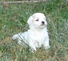 petit chien blanc au regard tres expressif