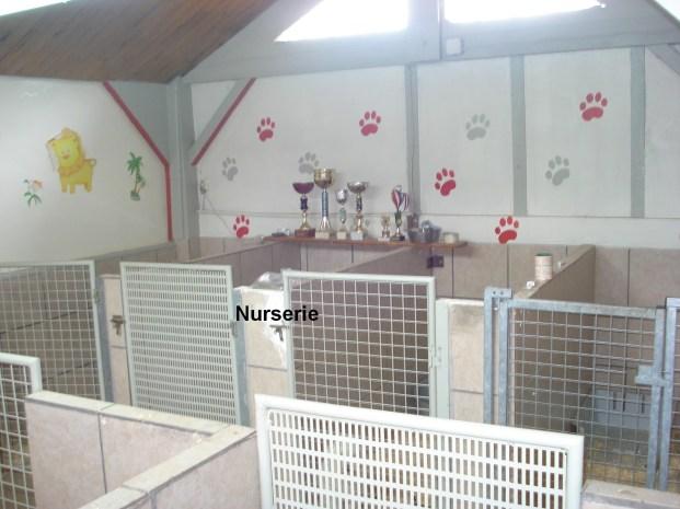nurserie de l élevage de coton de tulear