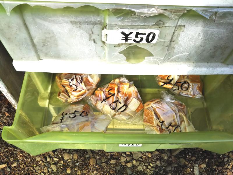 盛岡高松の池白鳥カモコイの餌やり