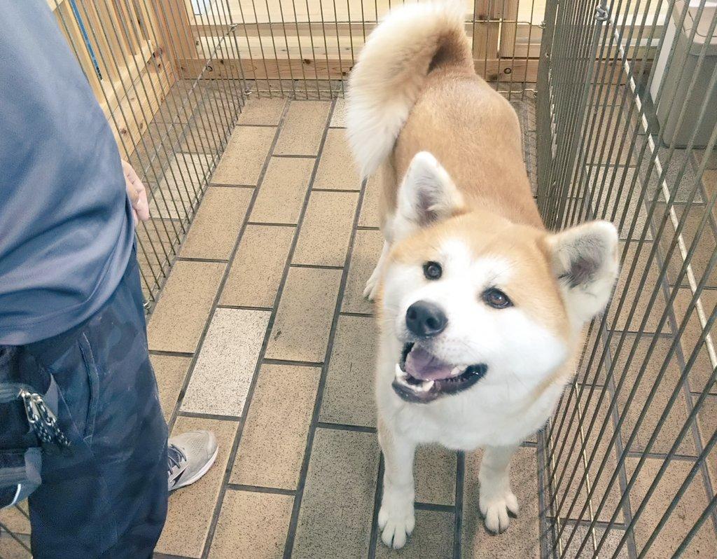 秋田犬サテライトステーション