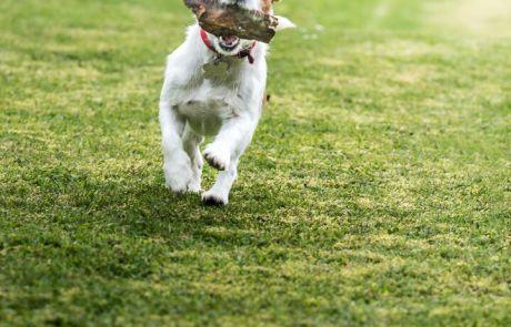 Stinchcombe Hill House Dog