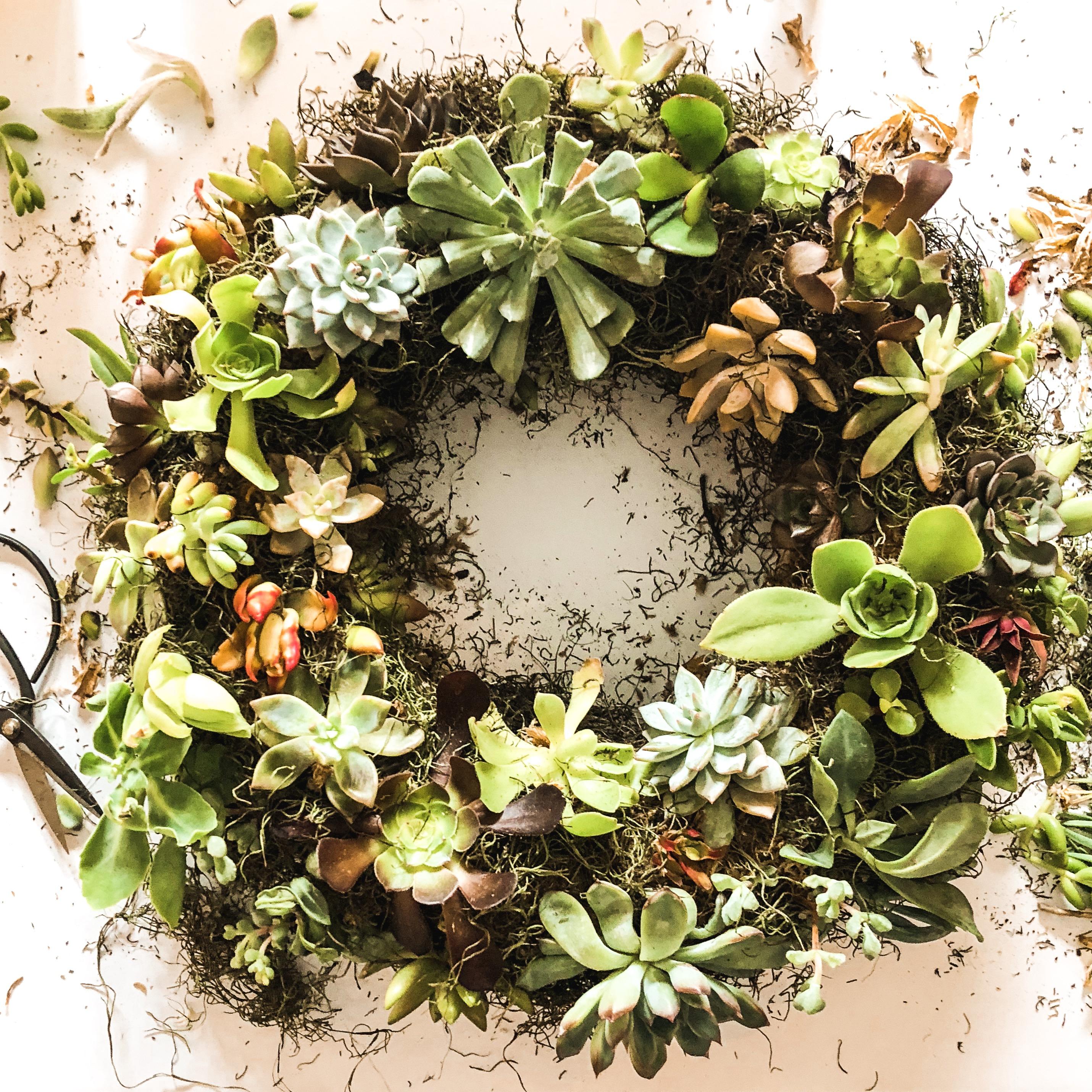 plant wreath