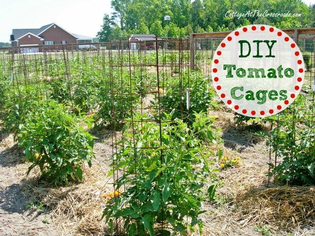 Do It Yourself Raised Garden Box