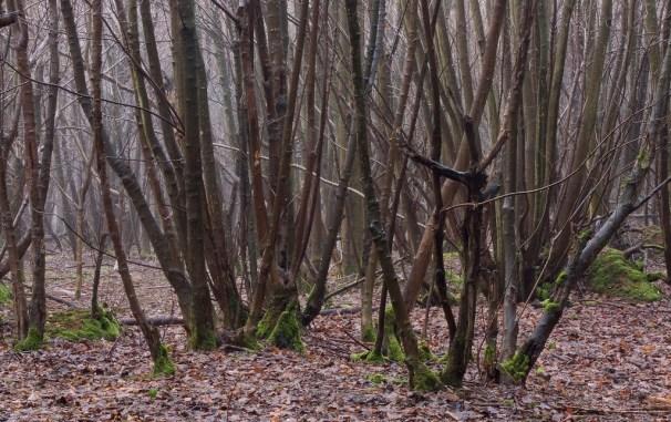 Photo credit: 'Coppiced Woodland' - Dominic's pics via Foter.com / CC BY Original image URL: https://www.flickr.com/photos/dominicspics/5444675764/