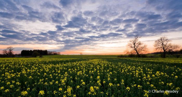 Doolittle Lane Fields Totternhoe