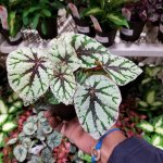 Houseplants – The Complete Guide