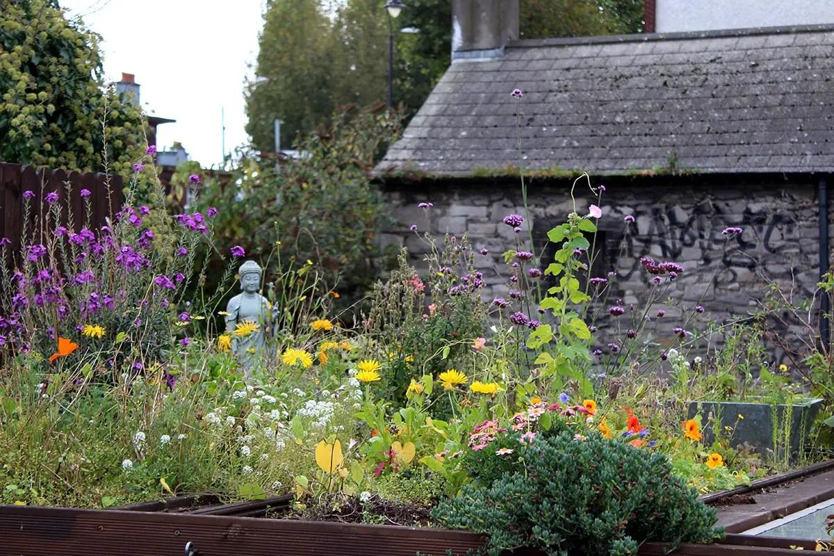 Irish Cottage Gardens  Cottage Flowers And Gardens
