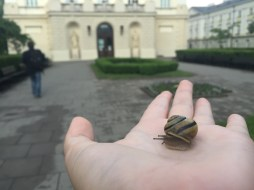 A snail I named Frederick after Chopin at the University of Warsaw.