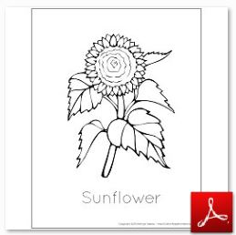 Sunflowers Lesson Plan ~ Geography, Science, Reading, and