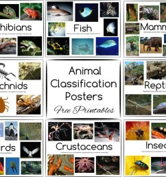 Animal Classification Posters and Games ~ Free Printables [ 775 x 1020 Pixel ]