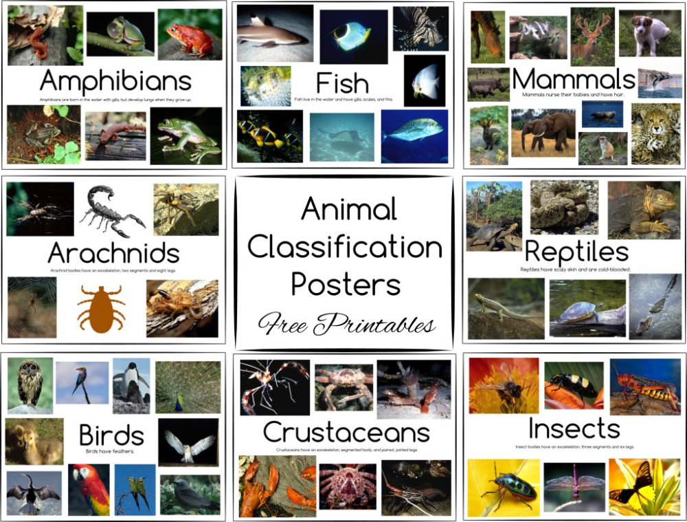 medium resolution of Animal Classification Posters and Games ~ Free Printables