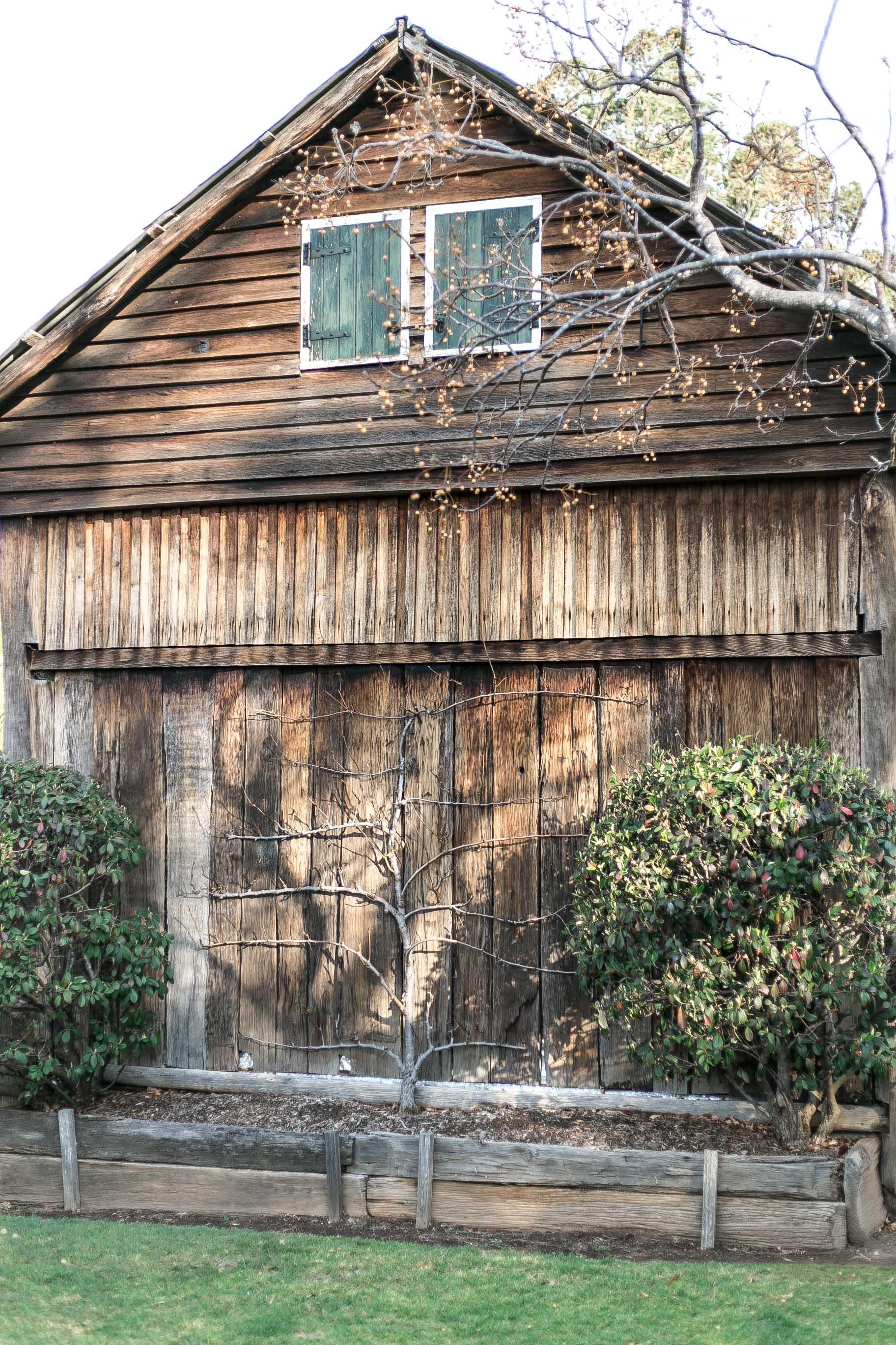 Cottonwood - Glenmore House fence vine