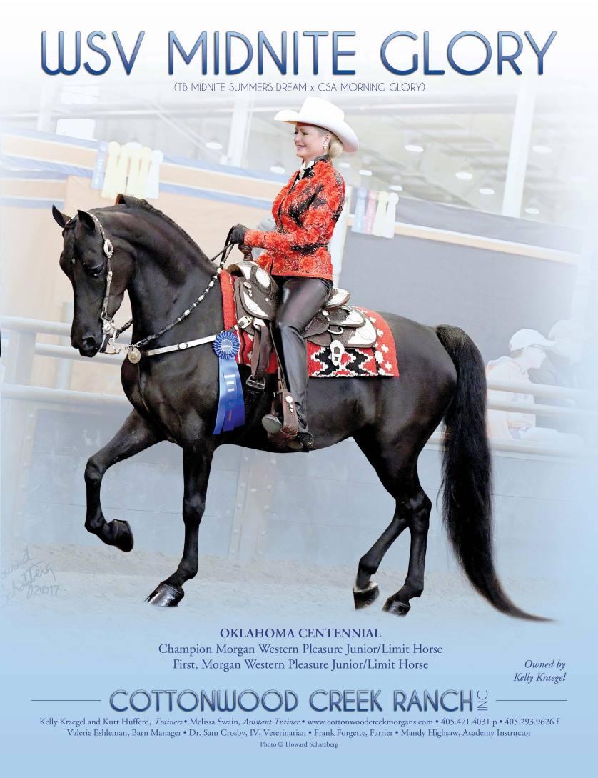 The Morgan Horse June 2017-5