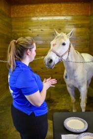 HorsePainting3