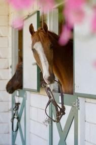 HorseWindow4