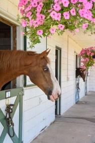 HorseWindow2