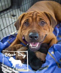 black dog animal rescue logo