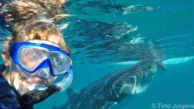 Oslob whaleshark Cebu Philippines