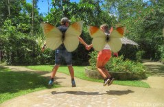 Visit to Butterfly Conservatory Bohol Philippines