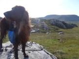 Merlin looking majestic.