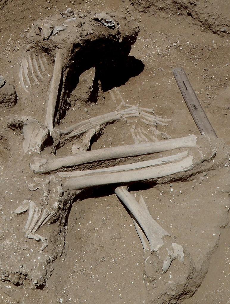 Squelette d'une des 27 victimes
