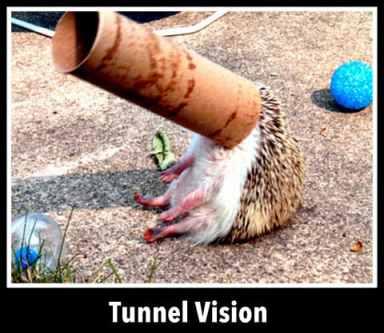 1-Tunnel Vision via Cute Overload