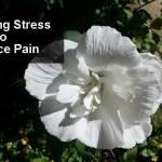 10 Ways to Decrease Stress