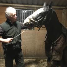 Horse_Dentist_Livery